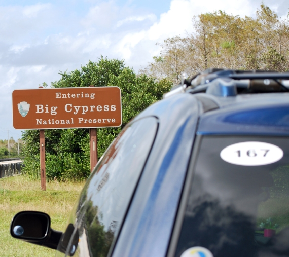 big-blue-at-big-cypress-national-preserve