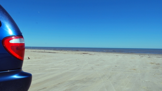 Big Blue on Surfside Free Beach with a bird and the moon! Dolphins were frolicking out past the sandbar!