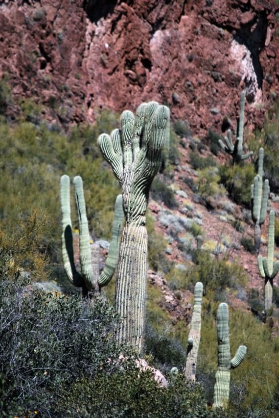 fill saguaro