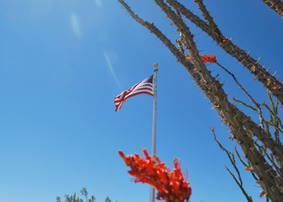 flag-at-joshua-tree