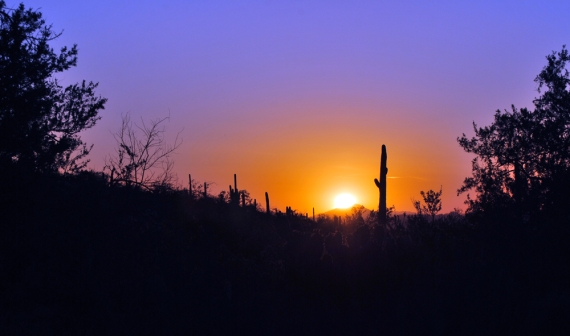sunset at saguaro