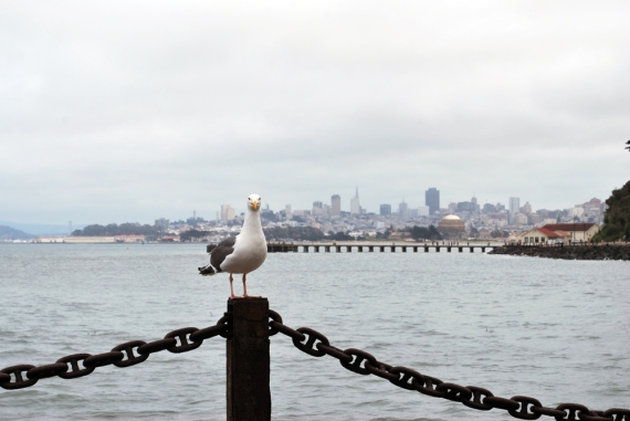 seagull at san fran